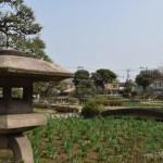 堀切菖蒲園1(圧縮)